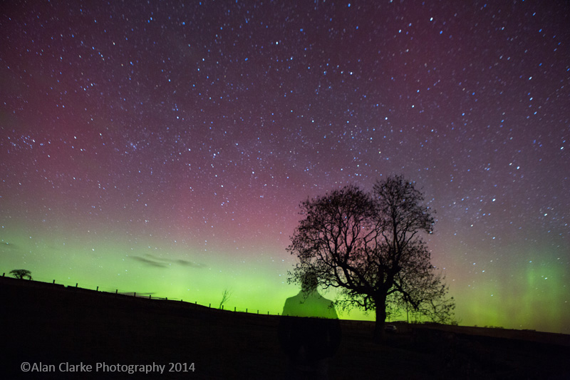 Northern lights with tree and me